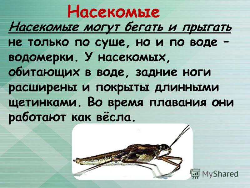 Насекомые Насекомые могут бегать и прыгать не только по суше, но и по воде – водомерки. У насекомых, обитающих в воде, задние ноги расширены и покрыты длинными щетинками. Во время плавания они работают как вёсла.