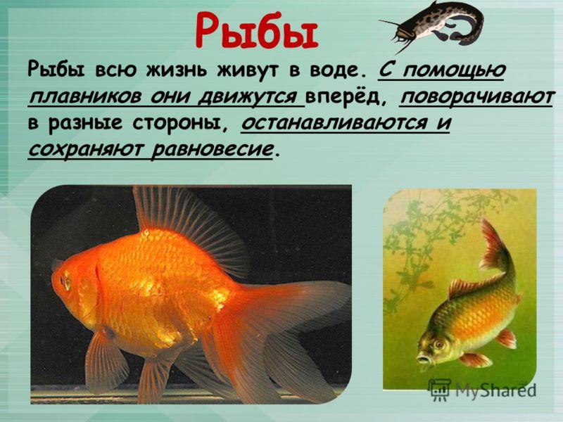 Рыбы всю жизнь живут в воде. С помощью плавников они движутся вперёд, поворачивают в разные стороны, останавливаются и сохраняют равновесие. Рыбы
