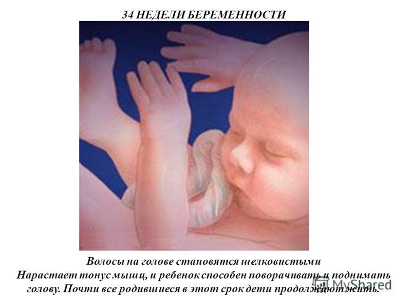 34 НЕДЕЛИ БЕРЕМЕННОСТИ Волосы на голове становятся шелковистыми Нарастает тонус мышц, и ребенок способен поворачивать и поднимать голову. Почти все родившиеся в этот срок дети продолжают жить.