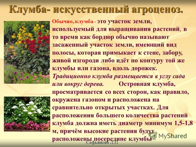Клумба- искусственный агроценоз. Обычно, клумба - это участок земли, используемый для выращивания растений, в то время как бордюр обычно называют засаженный участок земли, имеющий вид полосы, которая примыкает к стене, забору, живой изгороди либо идё