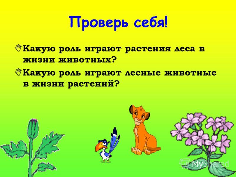 Восстанови цепи питания, сложившиеся в лесу: а) осина _______ ястреб; б) сосна жук-короед __________ ; в) _________ белка куница.