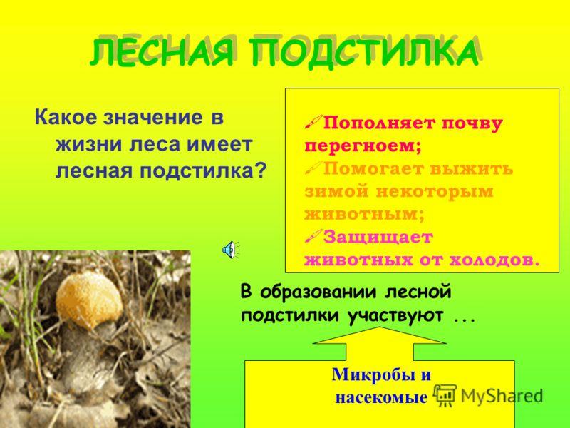 Проверь себя! Какую роль играют растения леса в жизни животных? Какую роль играют лесные животные в жизни растений?