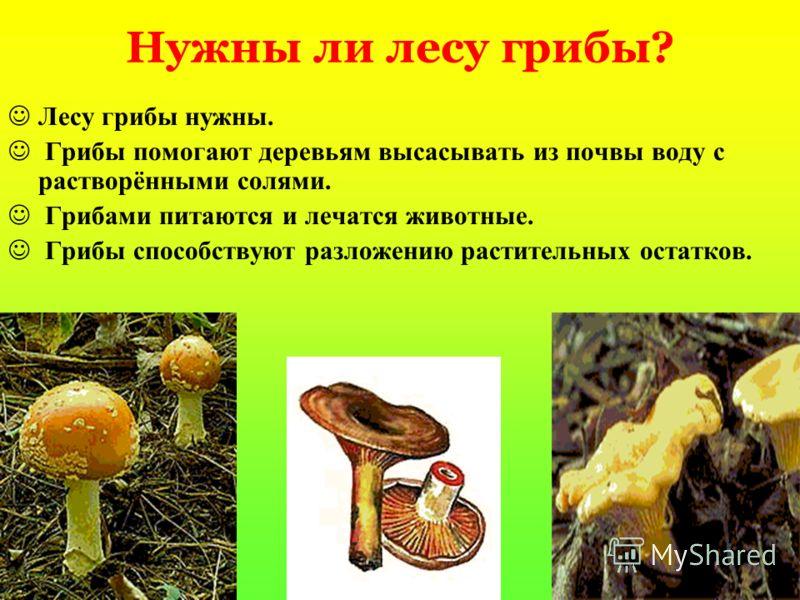 О каких обитателях леса идёт речь? И на горке, и под горкой, Под берёзой, и под ёлкой, Хороводами и в ряд В шляпках молодцы стоят.
