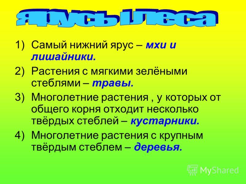 Челябинская область богата лесами. Почти четвёртая часть её территории занята зелёным «океаном». Больше всего лесов в западной горно- лесной части Челябинской области. На крайнем западе – в Ашинском районе – распространены широколиственные леса. В го