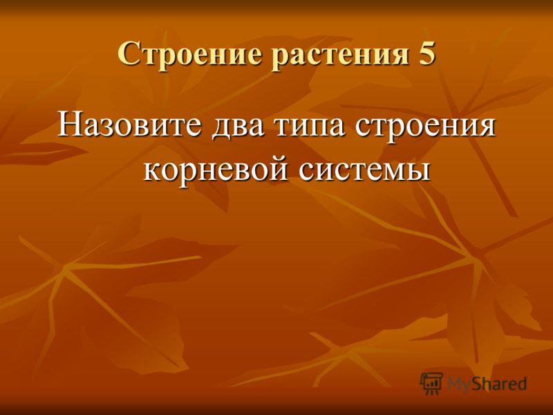 Строение растения 5 Назовите два типа строения корневой системы