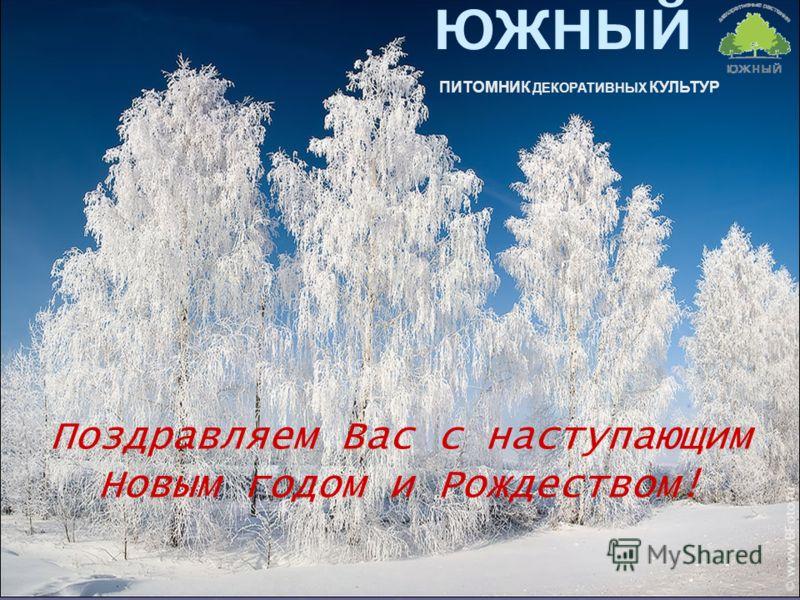 ЮЖНЫЙ ПИТОМНИК ДЕКОРАТИВНЫХ КУЛЬТУР Поздравляем Вас с наступающим Новым годом и Рождеством!