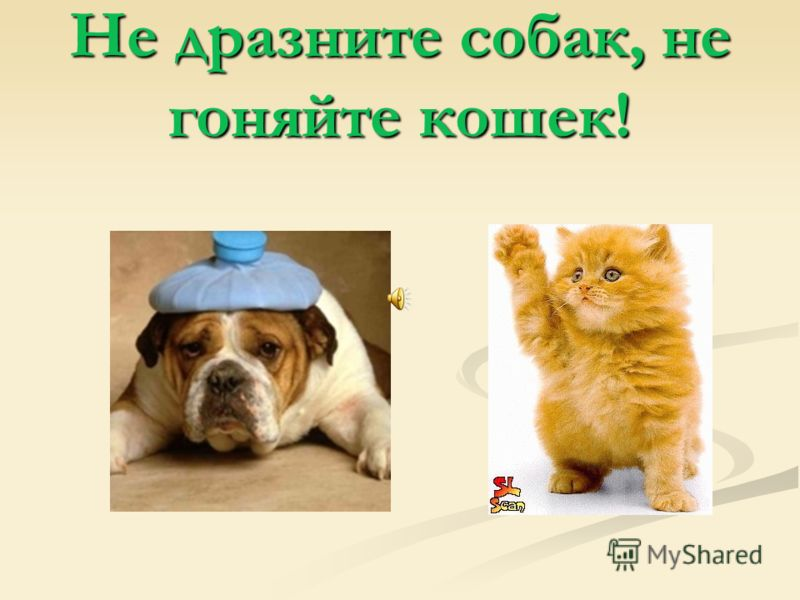 Не дразните собак, не гоняйте кошек!