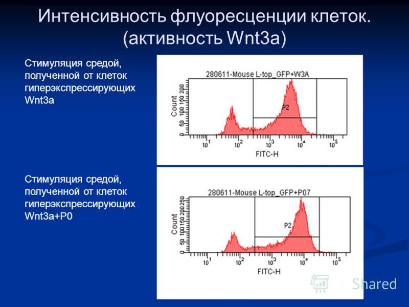 Интенсивность флуоресценции клеток. (активность Wnt3a) Стимуляция средой, полученной от клеток гиперэкспрессирующих Wnt3a+P0 Стимуляция средой, полученной от клеток гиперэкспрессирующих Wnt3a