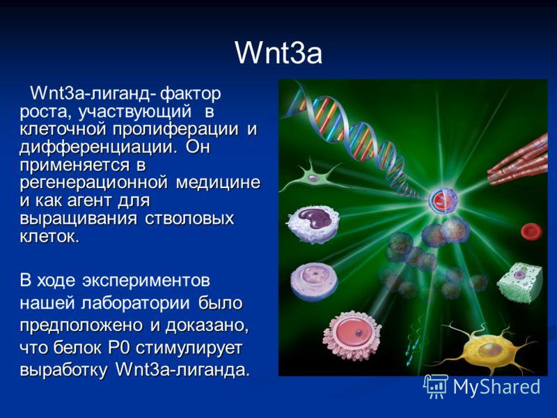 Wnt3а клеточной пролиферации и дифференциации. Он применяется в регенерационной медицине и как агент для выращивания стволовых клеток. Wnt3а-лиганд- фактор роста, участвующий в клеточной пролиферации и дифференциации. Он применяется в регенерационной