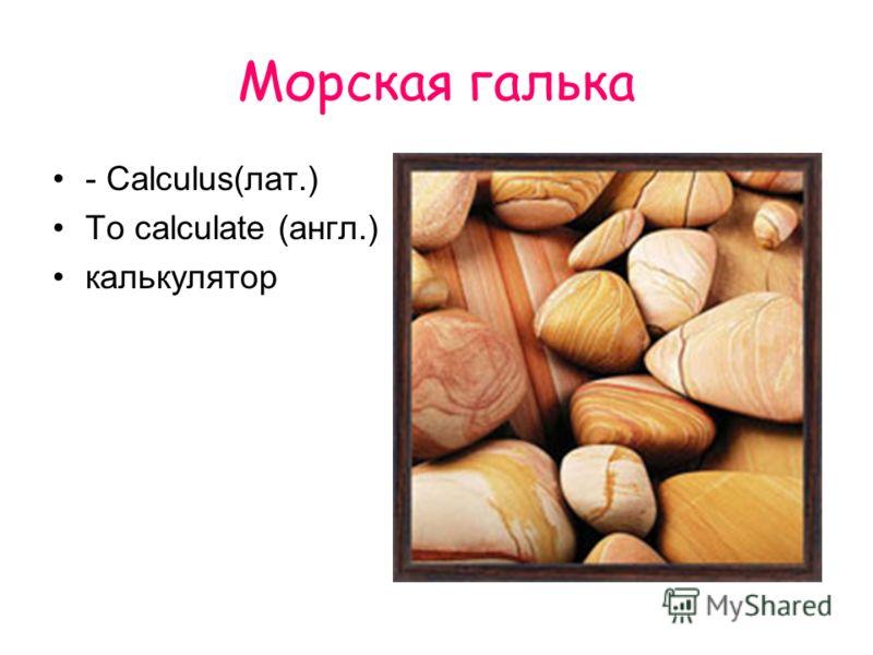 Морская галька - Calculus(лат.) To calculate (англ.) калькулятор