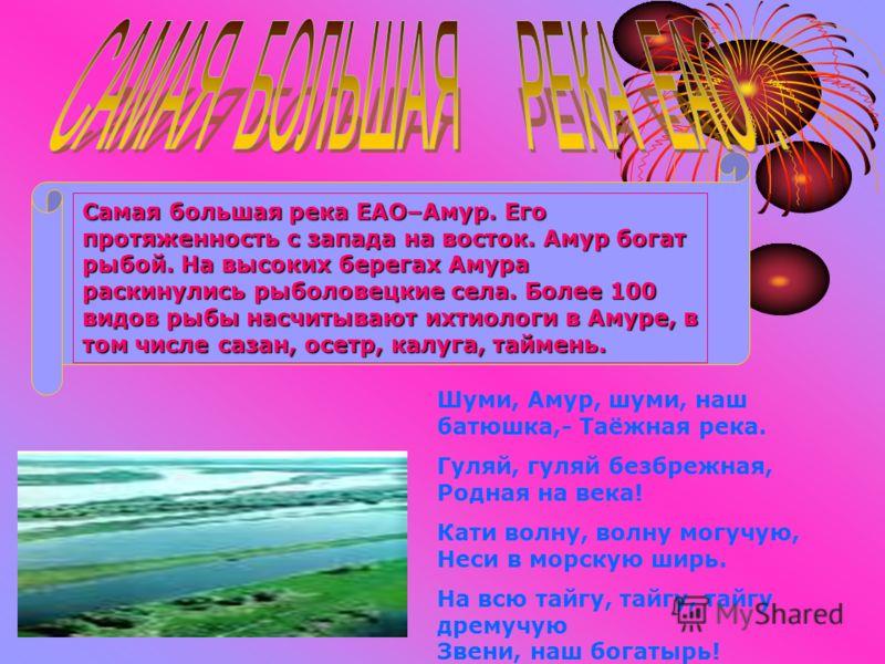 Самая большая река ЕАО–Амур. Его протяженность с запада на восток. Амур богат рыбой. На высоких берегах Амура раскинулись рыболовецкие села. Более 100 видов рыбы насчитывают ихтиологи в Амуре, в том числе сазан, осетр, калуга, таймень. Шуми, Амур, шу