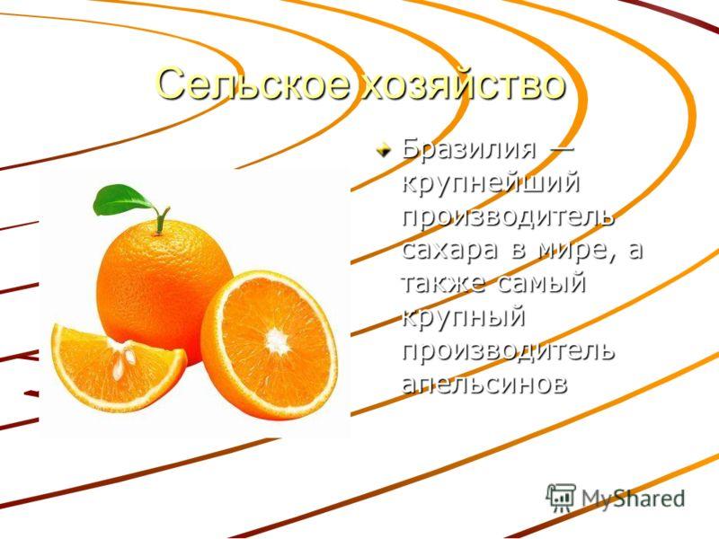 Сельское хозяйство Бразилия крупнейший производитель сахара в мире, а также самый крупный производитель апельсинов