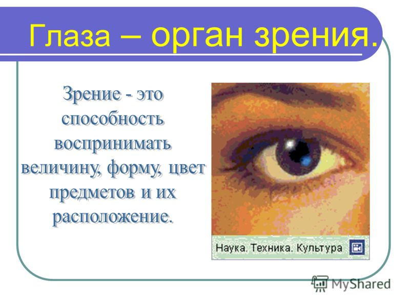 Доклад глаз орган зрения 1739