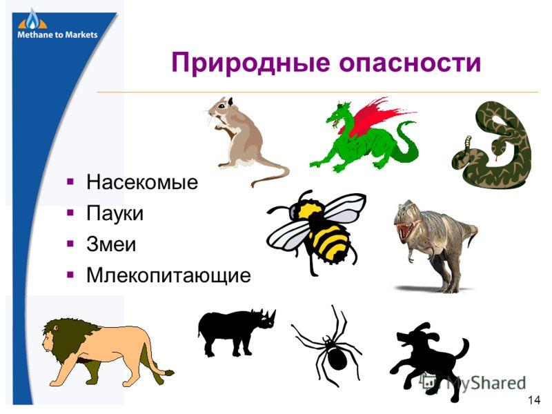 14 Природные опасности Насекомые Пауки Змеи Млекопитающие 14