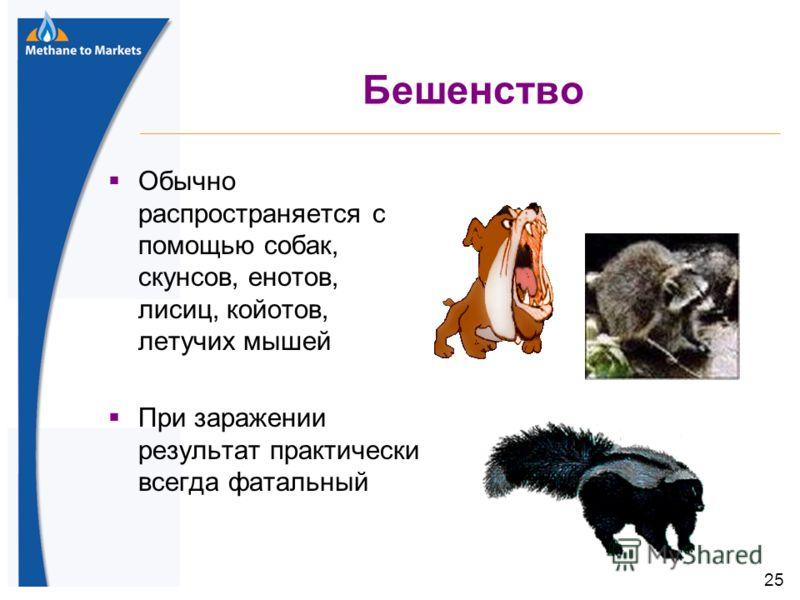 25 Бешенство Обычно распространяется с помощью собак, скунсов, енотов, лисиц, койотов, летучих мышей При заражении результат практически всегда фатальный