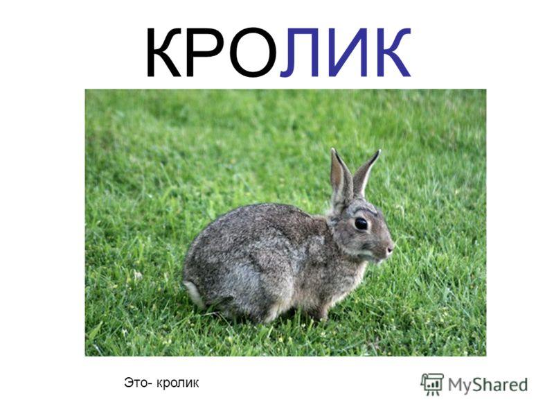 КРОЛИК Это- кролик