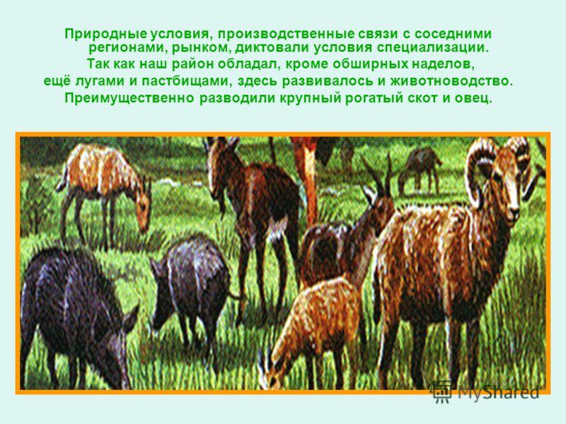 Природные условия, производственные связи с соседними регионами, рынком, диктовали условия специализации. Так как наш район обладал, кроме обширных наделов, ещё лугами и пастбищами, здесь развивалось и животноводство. Преимущественно разводили крупны