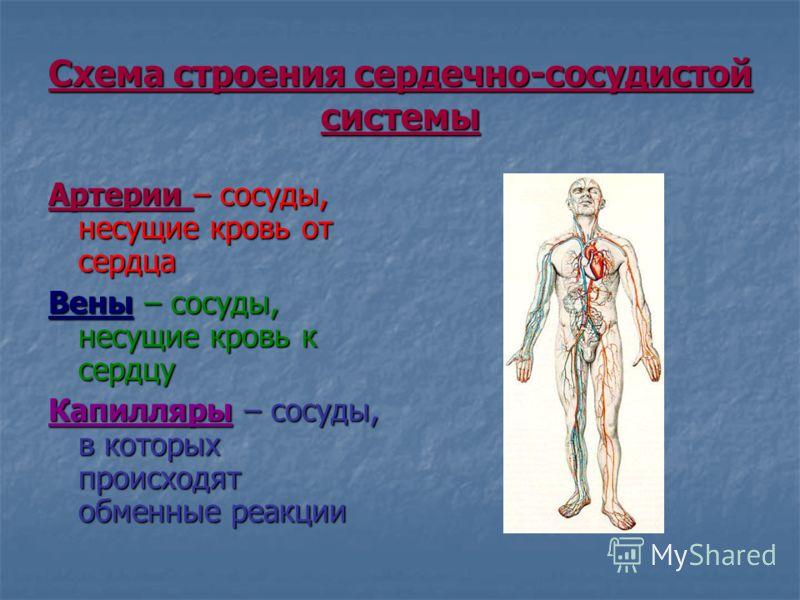 Презентация на тему ГОУ СПО Орехово зуевский медицинский  3 Схема