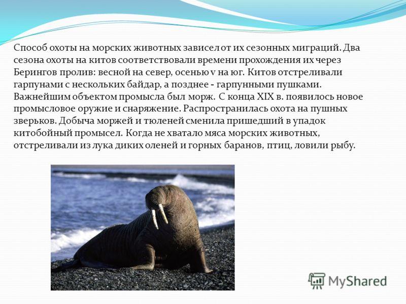 Способ охоты на морских животных зависел от их сезонных миграций. Два сезона охоты на китов соответствовали времени прохождения их через Берингов пролив: весной на север, осенью v на юг. Китов отстреливали гарпунами с нескольких байдар, а позднее - г