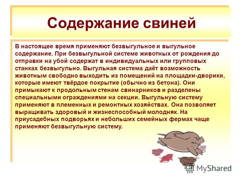 Содержание свиней В настоящее время применяют безвыгульное и выгульное содержание. При безвыгульной системе животных от рождения до отправки на убой содержат в индивидуальных или групповых станках безвыгульно. Выгульная система даёт возможность живот