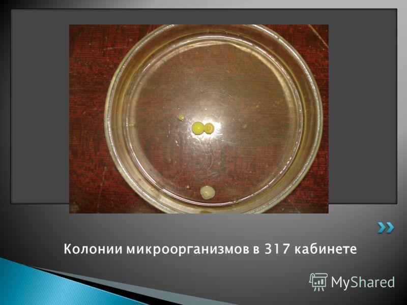 Колонии микроорганизмов в 317 кабинете