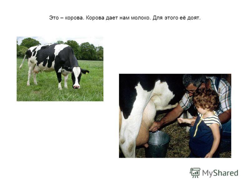 Это – корова. Корова дает нам молоко. Для этого её доят.