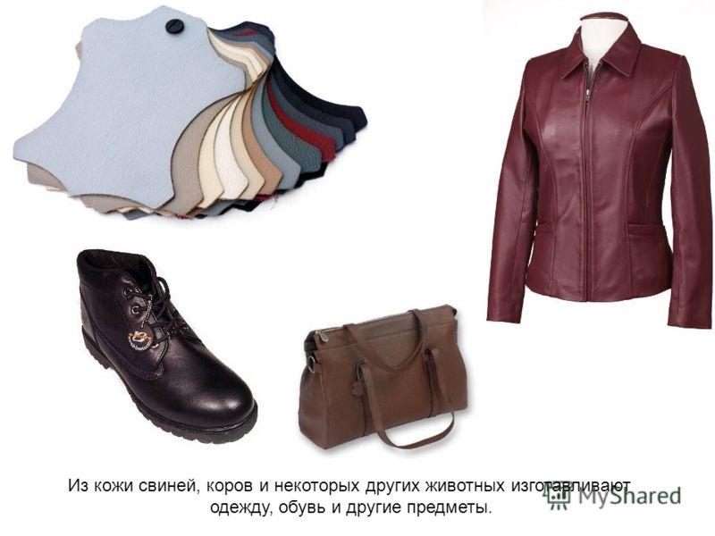 Из кожи свиней, коров и некоторых других животных изготавливают одежду, обувь и другие предметы.