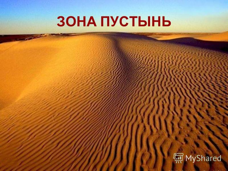 Солнце печет немилосердно. С вершины бархана, на котором мы стоим, во все стороны видны только одни сыпучие пески. Кажется, что нас окружают высокие волны внезапно застывшего моря. Правда, вдалеке, у горизонта, очертания барханов расплываются в горяч