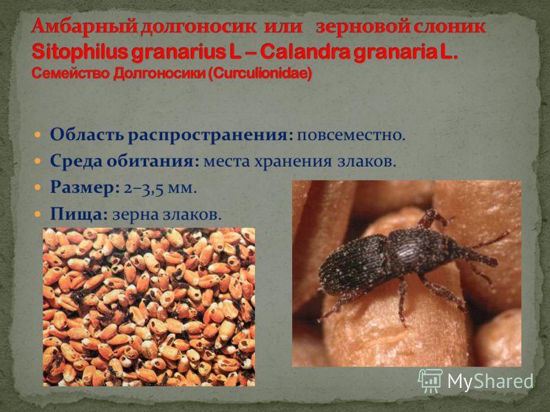 Область распространения: повсеместно. Среда обитания: места хранения злаков. Размер: 2–3,5 мм. Пища: зерна злаков.
