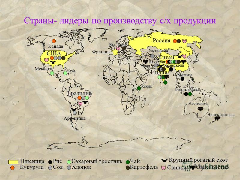 Страны- лидеры по производству с/х продукции Россия США Китай Бразилия Индия Пшеница Франция Кукуруза Канада Рис Соя Бангладеш Индонезия Вьетнам Арген