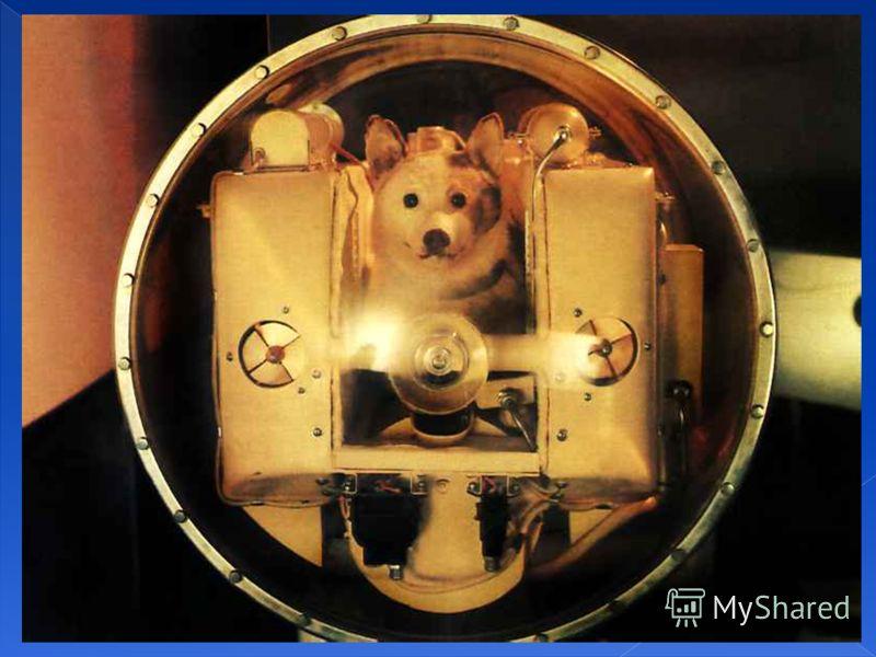 Ноябрь 1957г. – второй спутник с пассажиром на борту (собака Лайка). Ноябрь 1957г. – второй спутник с пассажиром на борту (собака Лайка).