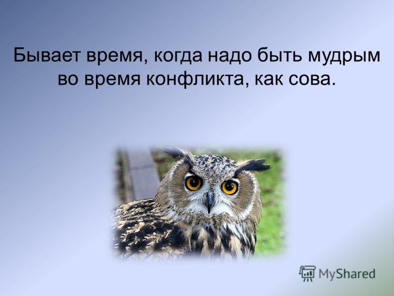 Бывает время, когда надо быть мудрым во время конфликта, как сова.