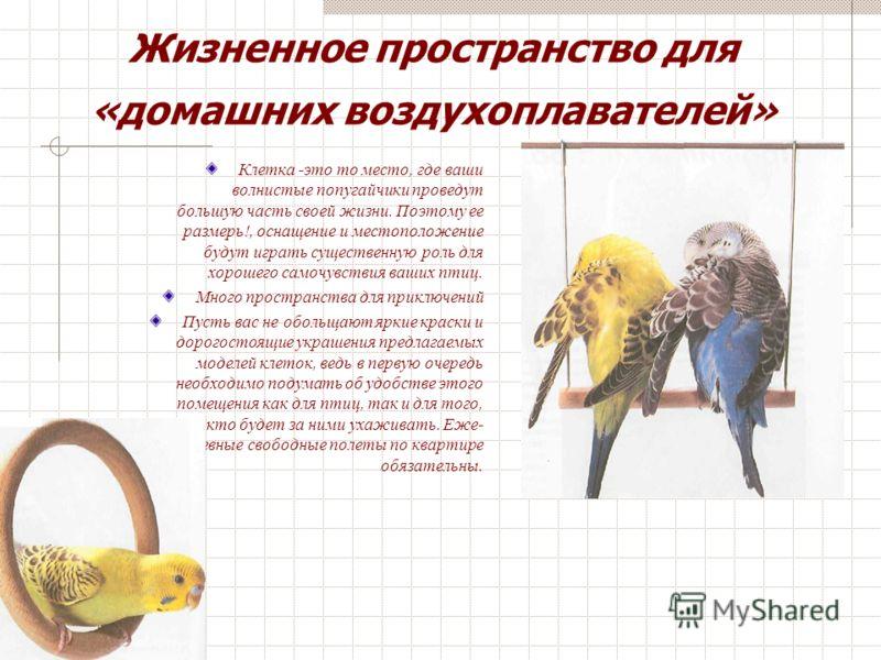 Волнистые попугайчики живут около 15 лет. Поэтому становится очевидным, что выбирать новых домочадцев вы должны осознанно, все хорошо обдумав. Используйте время, необходимое вам на раздумье, и тщательно понаблюдайте за птицами Возможностей для покупк