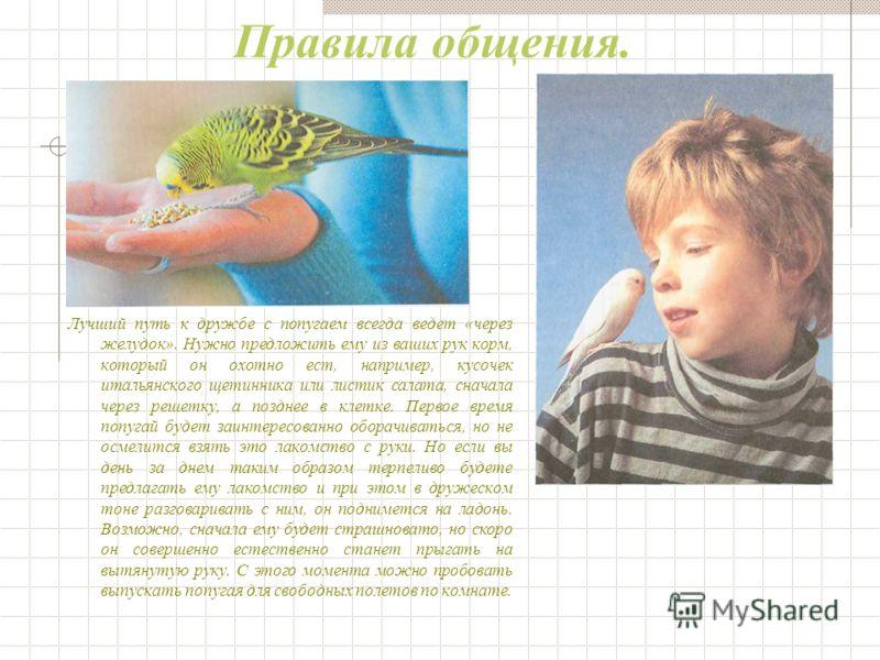 Как подружиться с попугайчиком Для транспортировки попугайчиков домой продавец специализированного зоомагазина разместит их в небольшой картонной коробке. Но если вы вместо этой коробки приобретете специальный транспортировочный ящик, то сможете испо