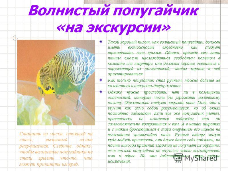 Зеленые корма. Если попугайчикам предоставить такую возможность, то они с удовольствием обогащают свое меню свежей пищей. Зелень всегда должна быть в меню попугаев. Птицы охотно едят бурно разрастающуюся в каждом саду и считающуюся «сорняком» среднюю