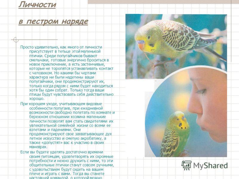 Волнистые попугаи Мои любимые питомцы Портнова Евгения гимназия 2.