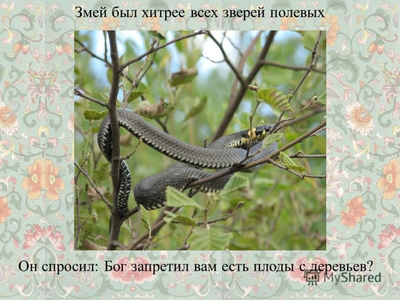 Змей был хитрее всех зверей полевых Он спросил: Бог запретил вам есть плоды с деревьев?