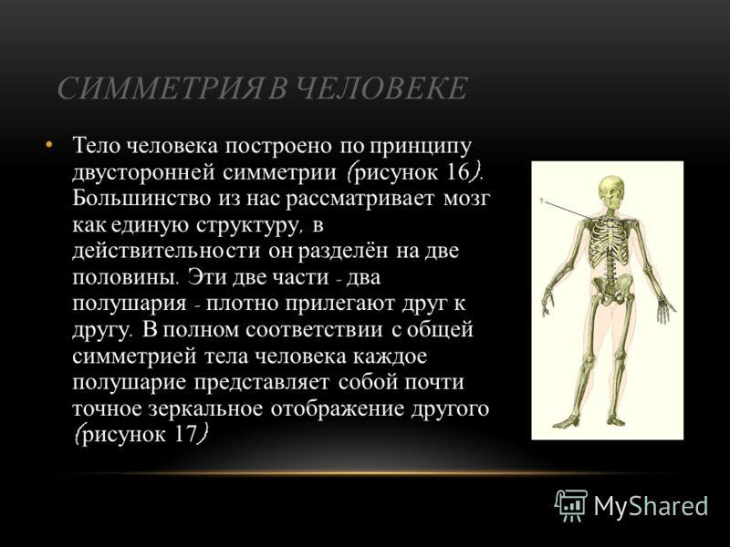 Понятия симметрии и асимметрии альтернативны. Чем более симметричен организм, тем менее он асимметричен и наоборот. Строение тела многих многоклеточных организмов отражает определённые формы симметрии, радиальную или билатеральную. Небольшое количест