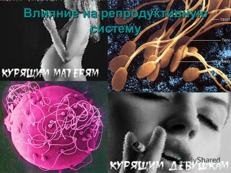 Влияние на репродуктивную систему