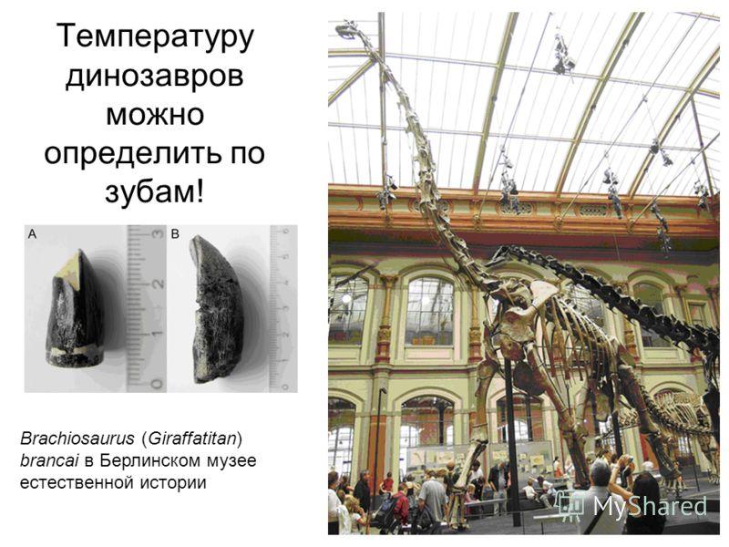 Температуру динозавров можно определить по зубам! Brachiosaurus (Giraffatitan) brancai в Берлинском музее естественной истории