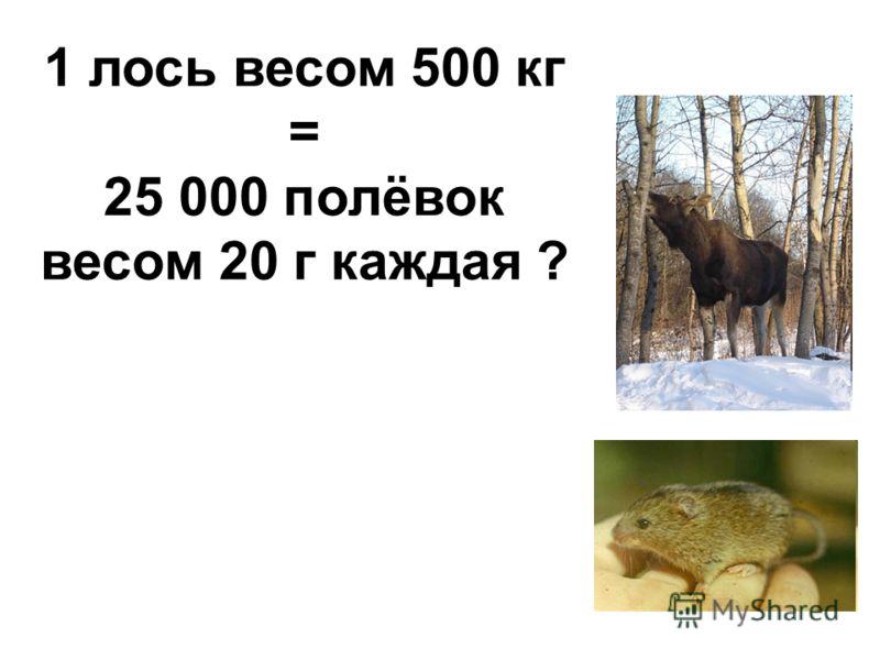 1 лось весом 500 кг = 25 000 полёвок весом 20 г каждая ?