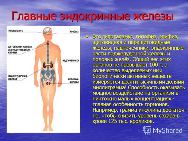 Главные эндокринные железы Это гипоталамус, гипофиз, эпифиз, щитовидная и паращитовидные железы, надпочечники, эндокринные части поджелудочной железы и половых желёз. Общий вес этих органов не превышает 100 г, а количество выделяемых ими биологически