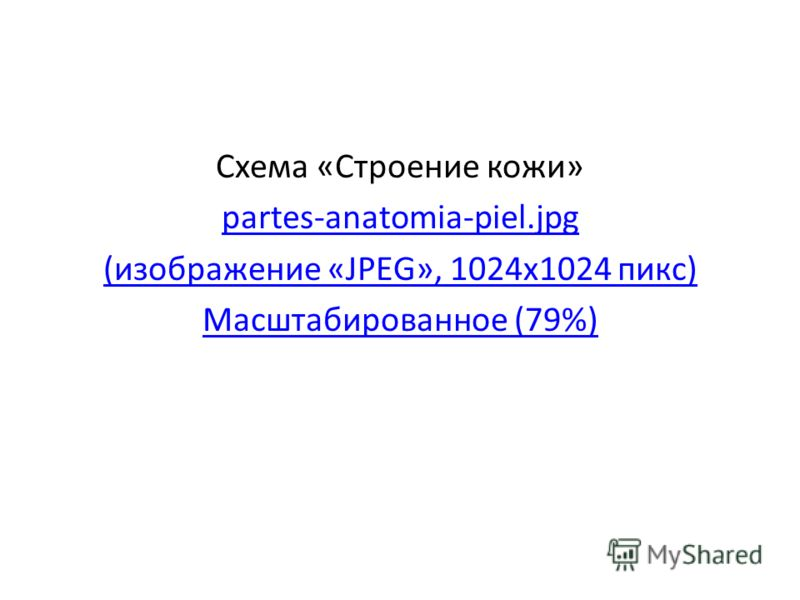 Схема «Строение кожи» partes-anatomia-piel.jpg (изображение «JPEG», 1024x1024 пикс) Масштабированное (79%)