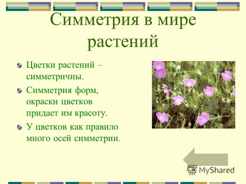 Симметрия в мире растений Цветки растений – симметричны. Симметрия форм, окраски цветков придает им красоту. У цветков как правило много осей симметрии.