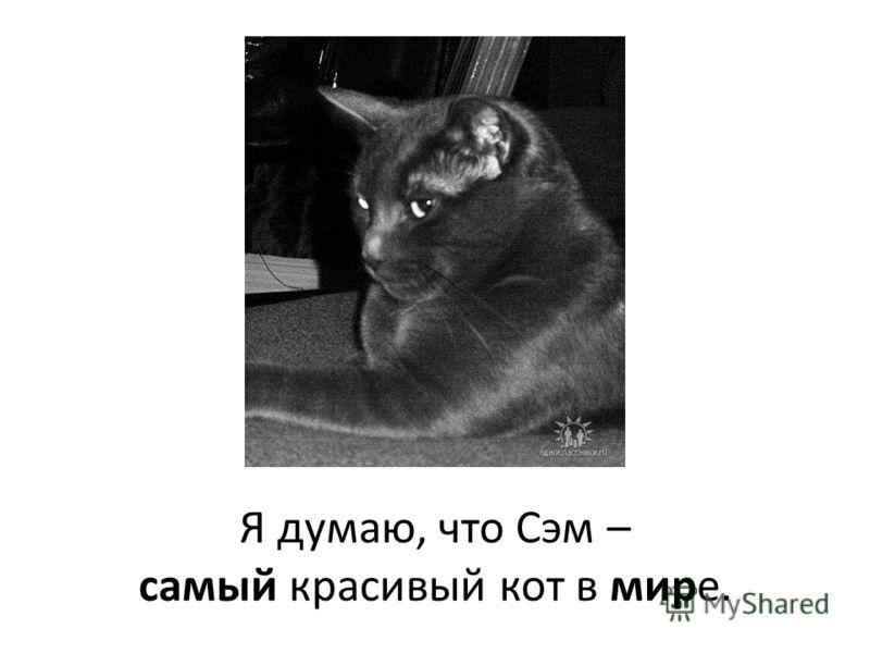 Я думаю, что Сэм – самый красивый кот в мире.