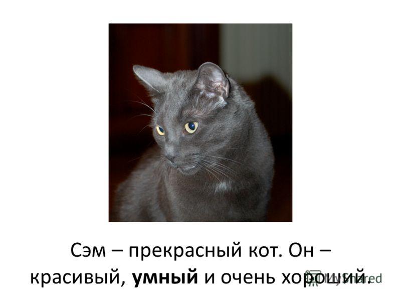 Сэм – прекрасный кот. Он – красивый, умный и очень хороший.