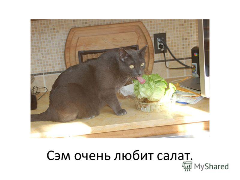 Сэм очень любит салат.