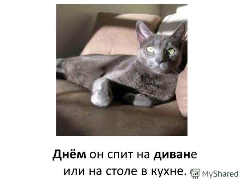 Днём он спит на диване или на столе в кухне.