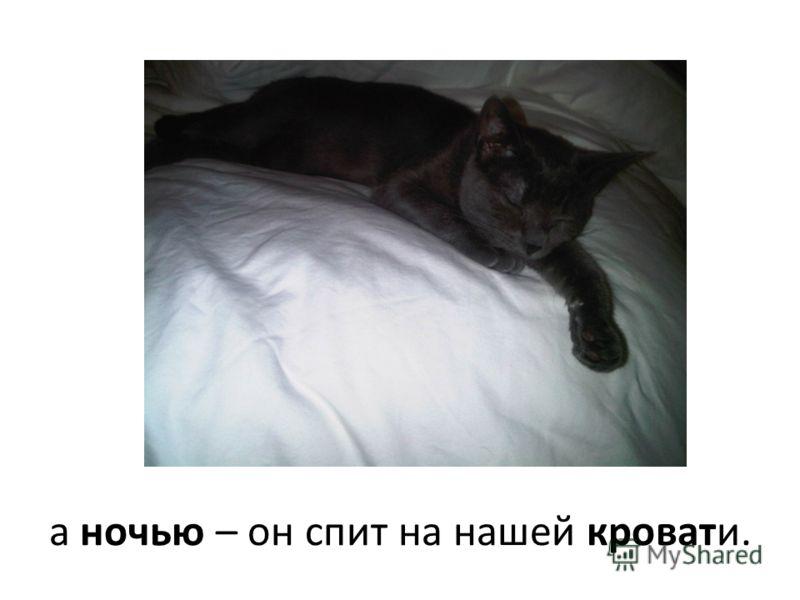 а ночью – он спит на нашей кровати.