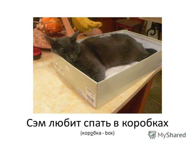 Сэм любит спать в коробках (коробка - box)